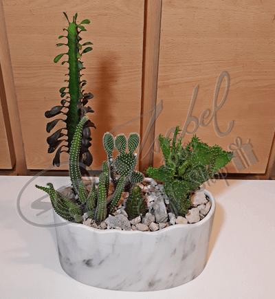 Cactus en Mármol