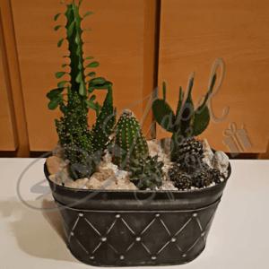 Cactus variadosv