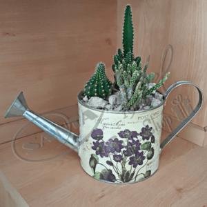 Regadera de Cactus